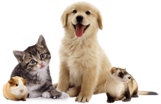 dog cat pet dander allergy